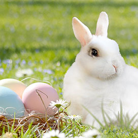 white bunny sitting next to painted eggs on grass