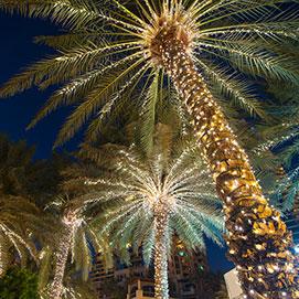 night of lights on palm trees